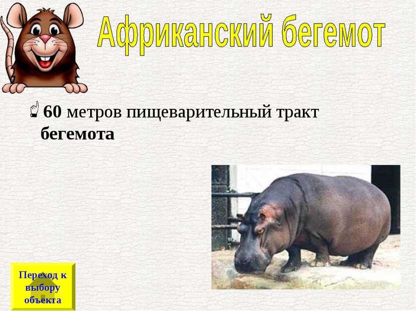 60метров пищеварительный тракт бегемота Переход к выбору объекта