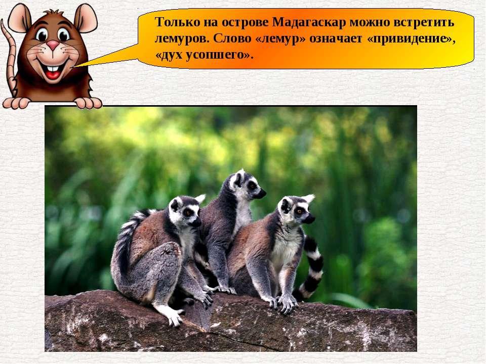 Только на острове Мадагаскар можно встретить лемуров. Слово «лемур» означает ...