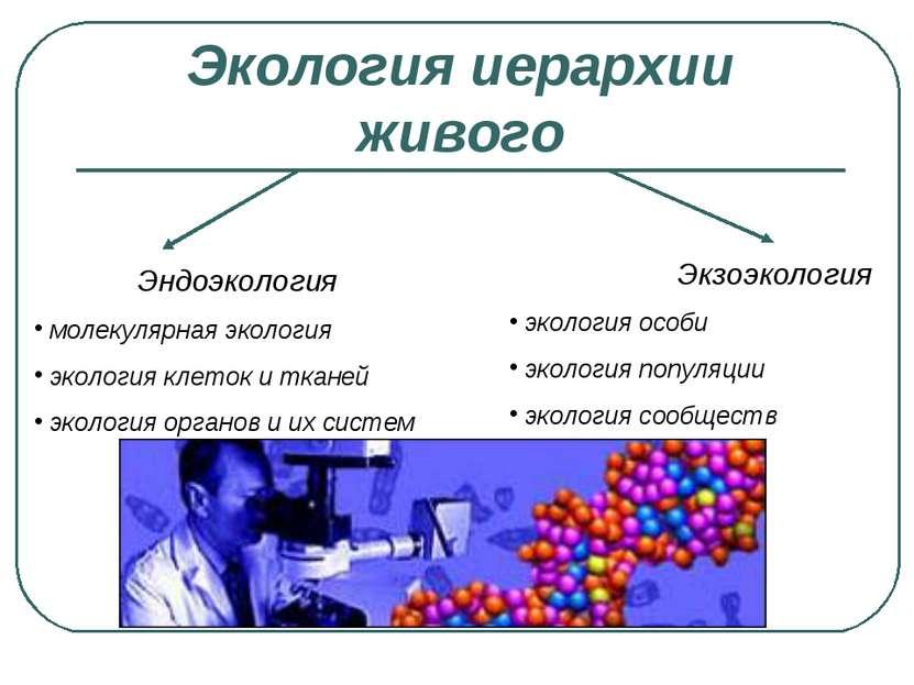 Экология иерархии живого Эндоэкология молекулярная экология экология клеток и...