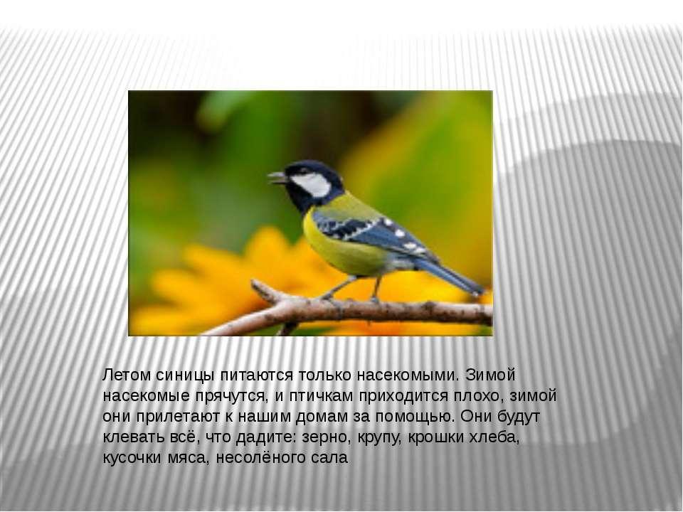 Летом синицы питаются только насекомыми. Зимой насекомые прячутся, и птичкам ...