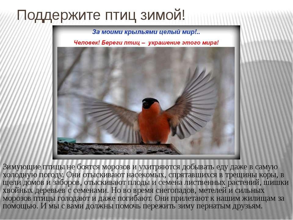 Поддержите птиц зимой! Зимующие птицы не боятся морозов и ухитряются добывать...