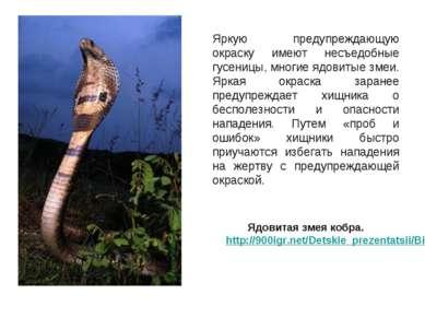 Яркую предупреждающую окраску имеют несъедобные гусеницы, многие ядовитые зме...