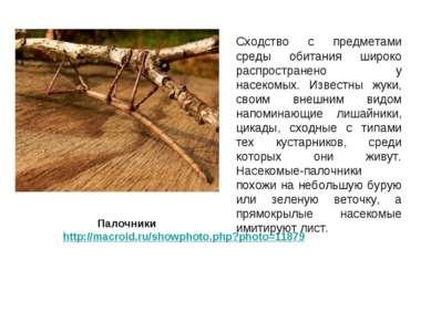 Сходство с предметами среды обитания широко распространено у насекомых. Извес...