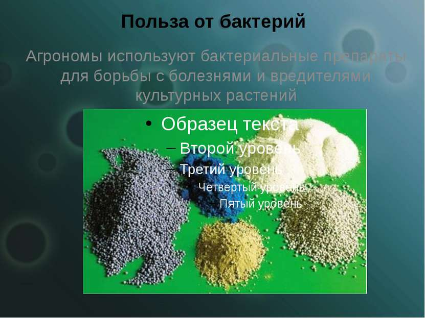 Польза от бактерий Агрономы используют бактериальные препараты для борьбы с б...