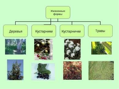 Деревья Кустарнички