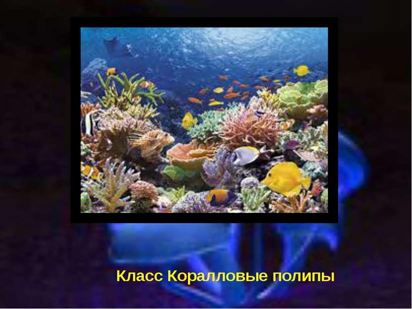 Класс Коралловые полипы