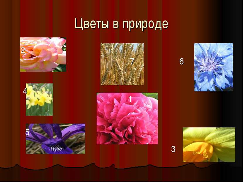 Цветы в природе 2 4 5 7 6 1 3