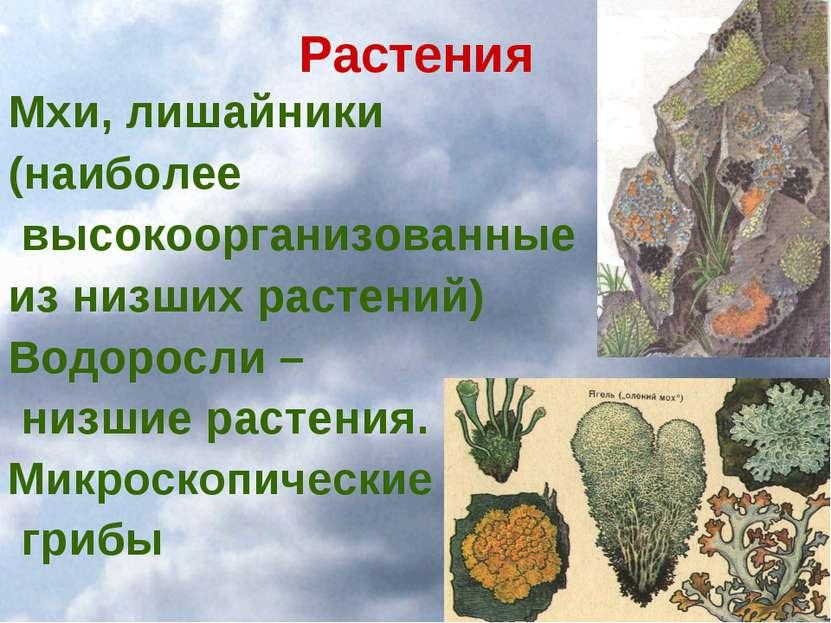 Растения Мхи, лишайники (наиболее высокоорганизованные из низших растений) Во...