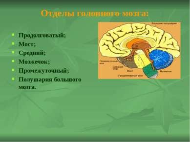 Рефлексы продолговатого мозга 1. Глотательный рефлекс. Сделайте в быстром тем...