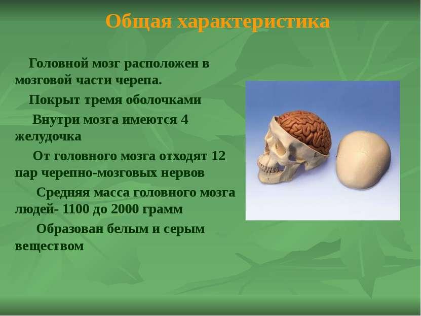Головной мозг в цифрах: Число нейронов в мозге-100 млрд..; Число нейронов в к...