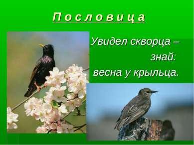 П о с л о в и ц а Увидел скворца – знай: весна у крыльца.
