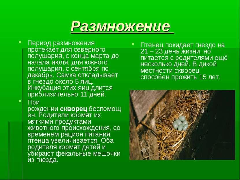 Размножение Период размножения протекает для северного полушария, с конца мар...