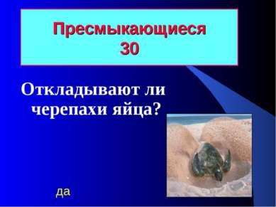 Пресмыкающиеся 30 Откладывают ли черепахи яйца? да
