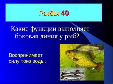 Рыбы 40 Какие функции выполняет боковая линия у рыб? Воспринимает силу тока в...