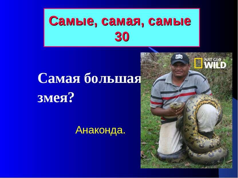 Самые, самая, самые 30 Самая большая змея? Анаконда.