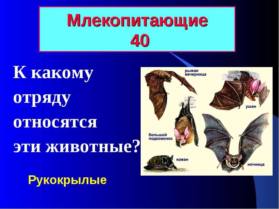 Млекопитающие 40 К какому отряду относятся эти животные? Рукокрылые