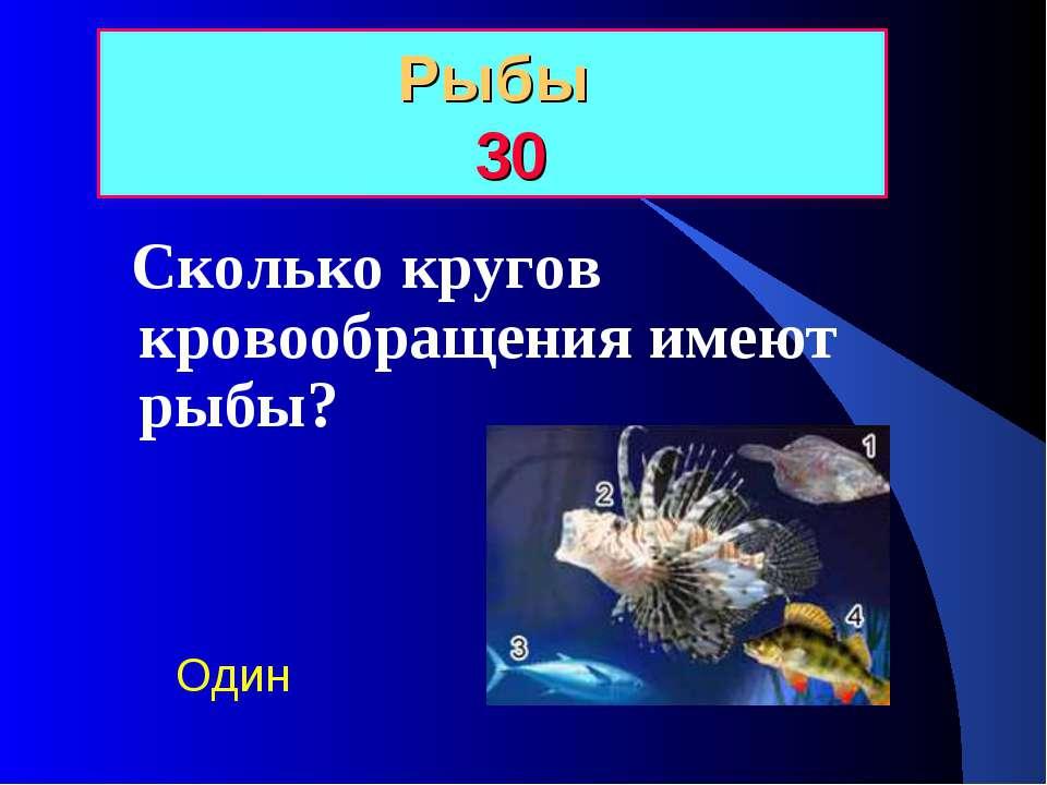 Рыбы 30 Сколько кругов кровообращения имеют рыбы? Один
