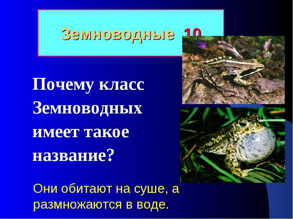 Земноводные 10 Почему класс Земноводных имеет такое название? Они обитают на ...