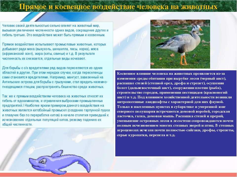 Прямое и косвенное воздействие человека на животных Косвенное влияние человек...
