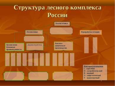 Структура лесного комплекса России