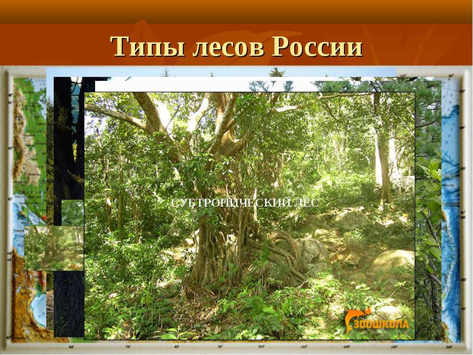Типы лесов России Смешанный лес ТЕМНОХВОЙНАЯ ТАЙГА СВЕТЛОХВОЙНАЯ ТАЙГА ШИРОКО...