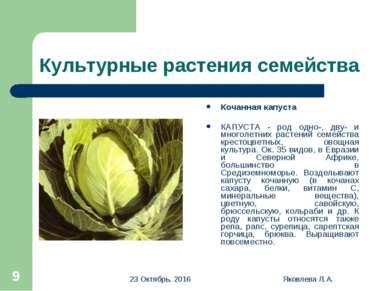 * Яковлева Л.А. * Культурные растения семейства Кочанная капуста КАПУСТА - ро...
