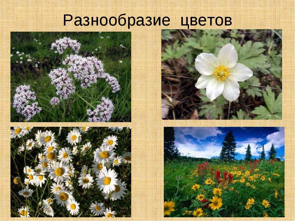 Разнообразие цветов
