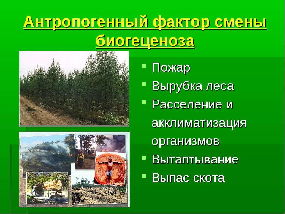 Антропогенный фактор смены биогеценоза Пожар Вырубка леса Расселение и акклим...