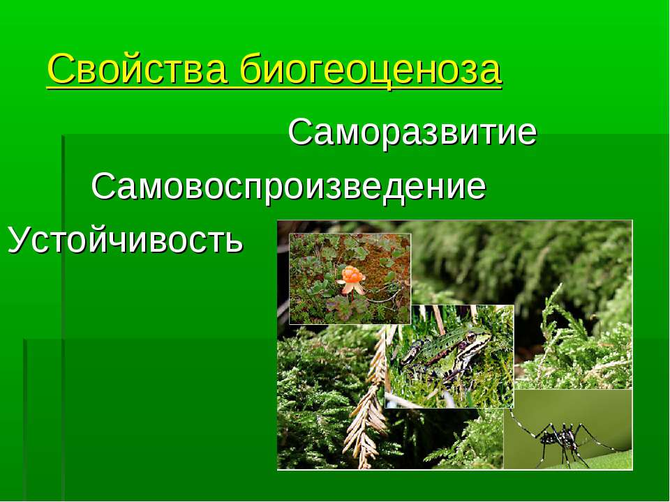 Свойства биогеоценоза Саморазвитие Самовоспроизведение Устойчивость