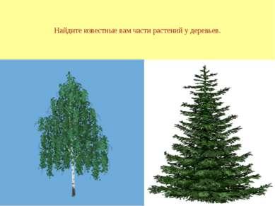 Найдите известные вам части растений у деревьев.