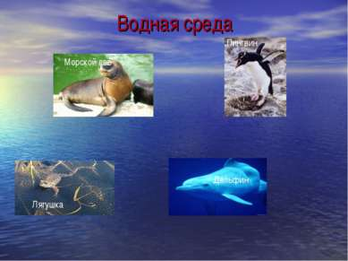 Водная среда Морской лев Пингвин Лягушка Дельфин