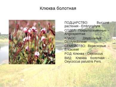 Клюква болотная ПОДЦАРСТВО: Высшие растения - Embryophyta ОТДЕЛ: Покрытосемен...