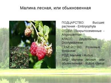 Малина лесная, или обыкновенная ПОДЦАРСТВО: Высшие растения - Embryophyta ОТД...