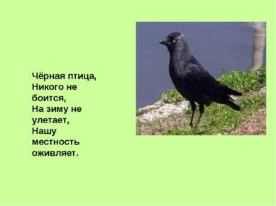 Чёрная птица, Никого не боится, На зиму не улетает, Нашу местность оживляет.