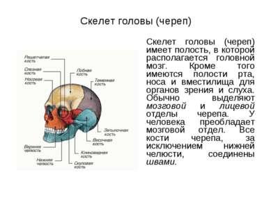Скелет головы (череп) Скелет головы (череп) имеет полость, в которой располаг...