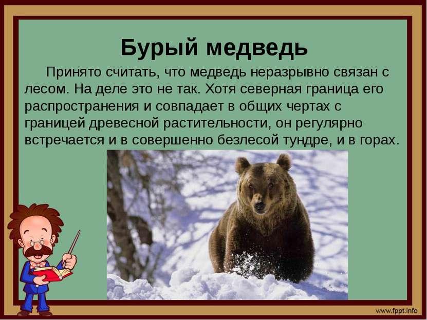 Бурый медведь Принято считать, что медведь неразрывно связан с лесом. На деле...