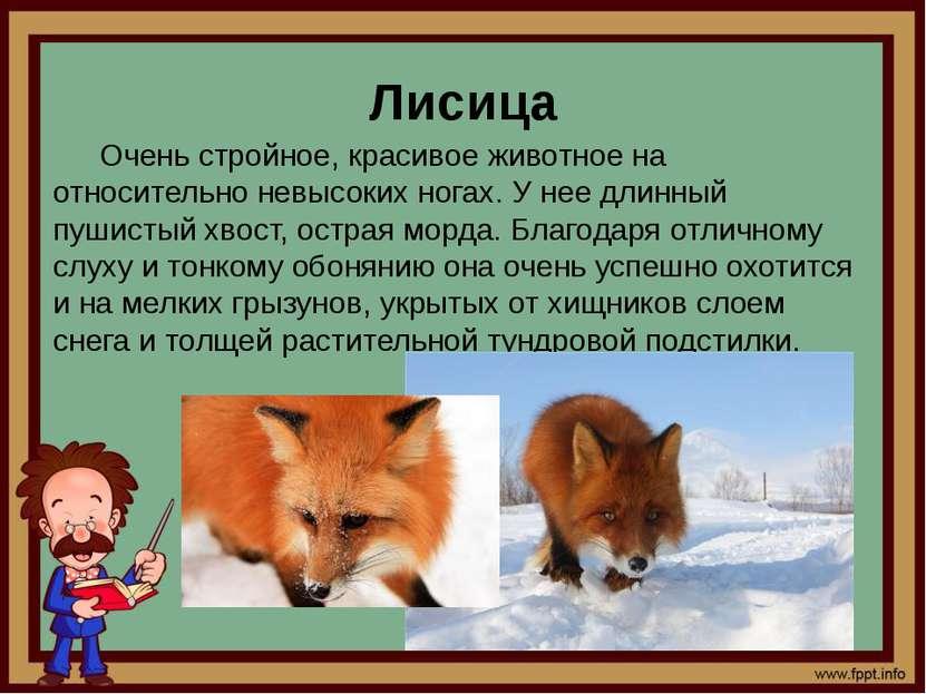 Лисица Очень стройное, красивое животное на относительно невысоких ногах. У н...