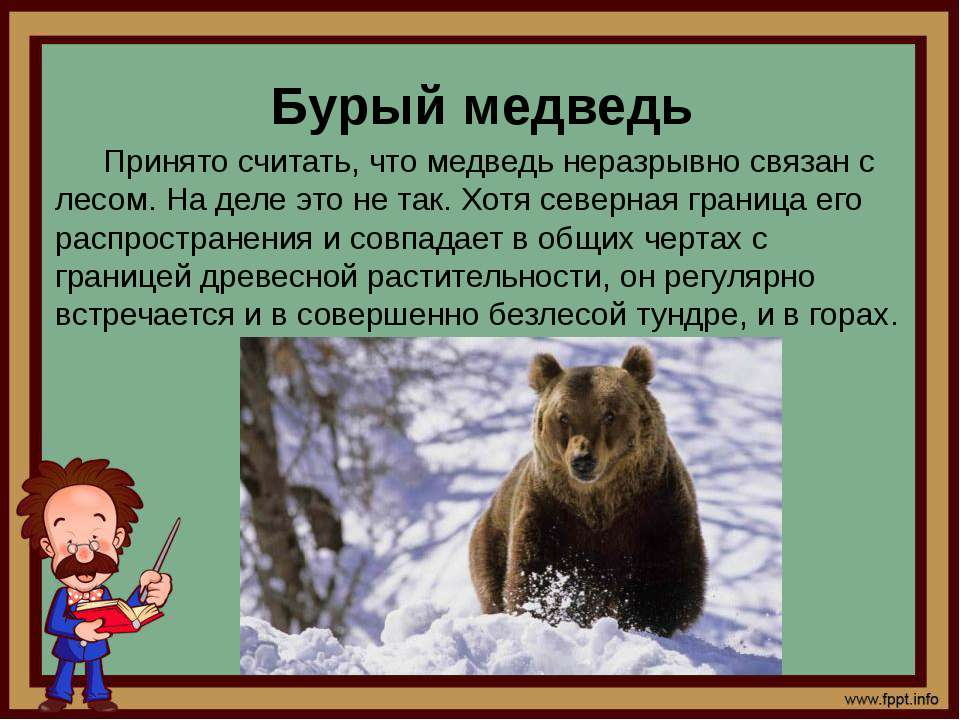 Картинки с описанием медведя