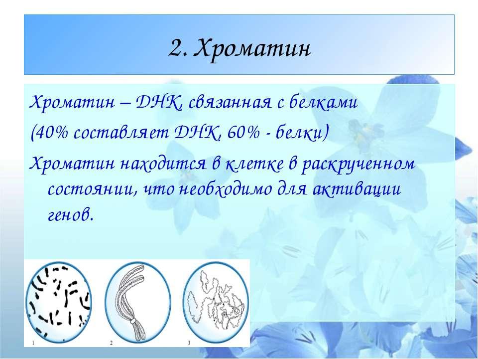 ХРОМОСОМА (от греч. chroma - цвет, краска + soma - тело)