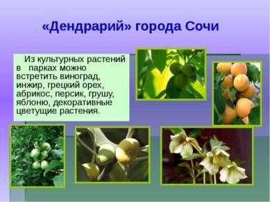 Из культурных растений в парках можно встретить виноград, инжир, грецкий орех...