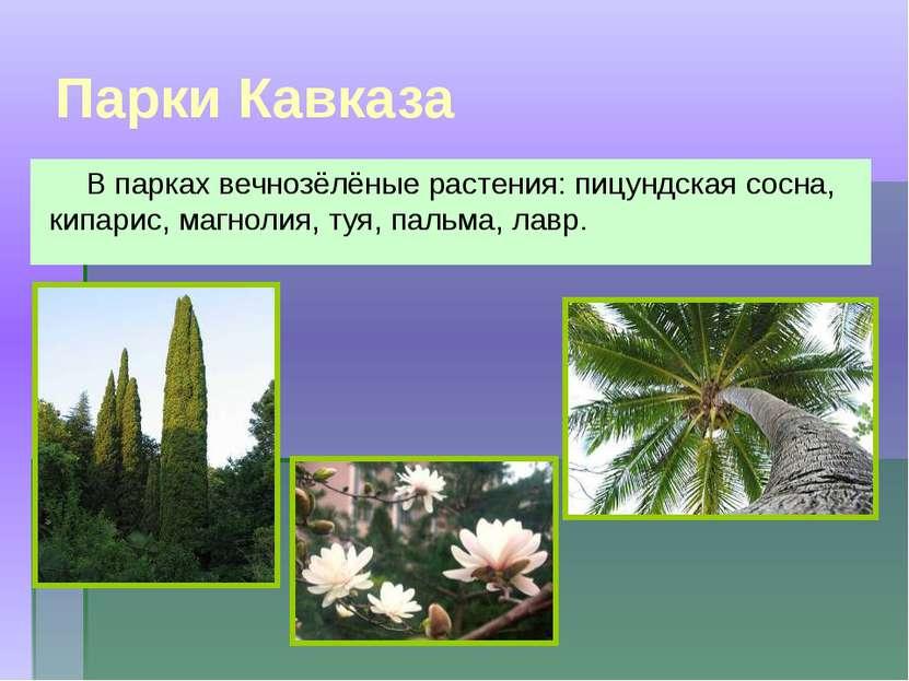 Парки Кавказа В парках вечнозёлёные растения: пицундская сосна, кипарис, магн...