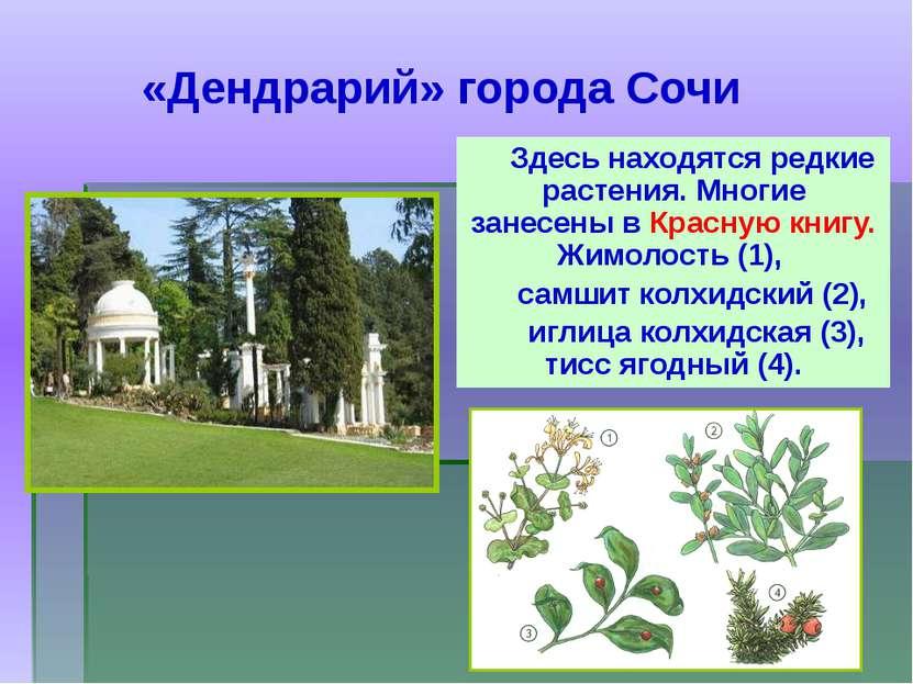 Здесь находятся редкие растения. Многие занесены в Красную книгу. Жимолость (...
