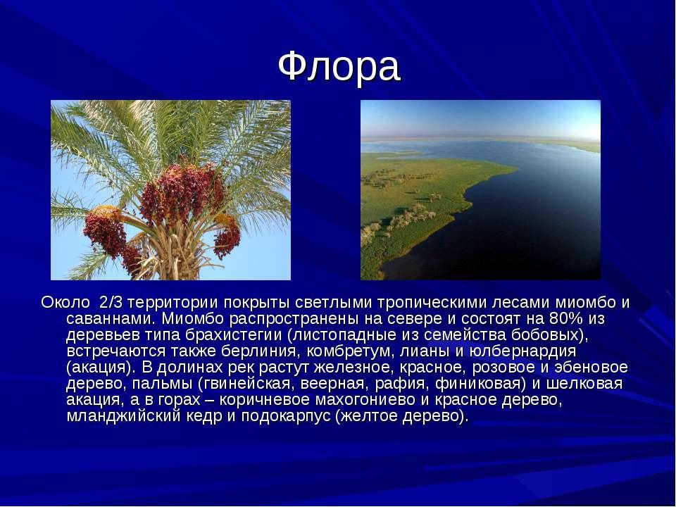 Флора Около 2/3 территории покрыты светлыми тропическими лесами миомбо и сава...