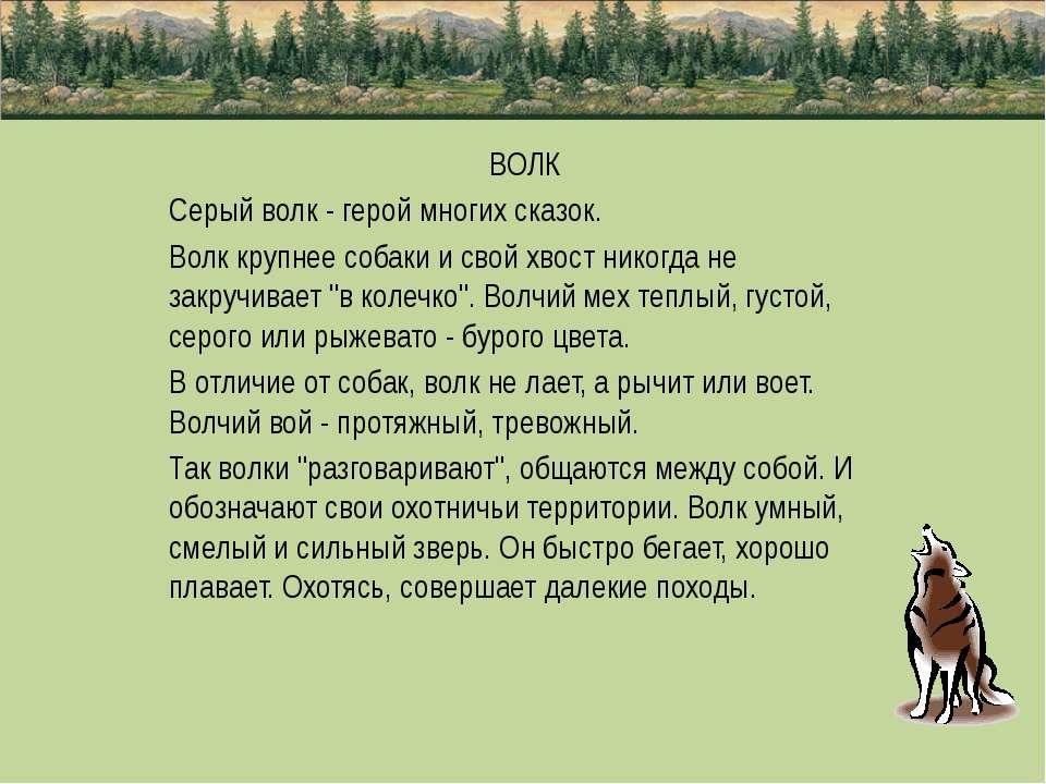 ВОЛК Серый волк - герой многих сказок. Волк крупнее собаки и свой хвост никог...