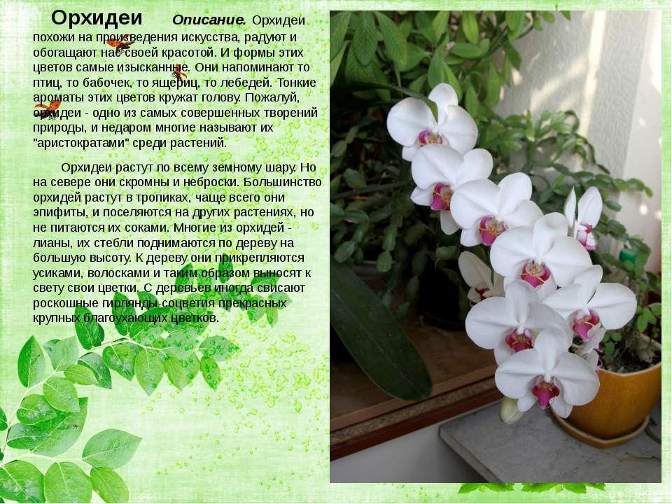 Орхидеи Описание. Орхидеи похожи на произведения искусства, радуют и обогащаю...