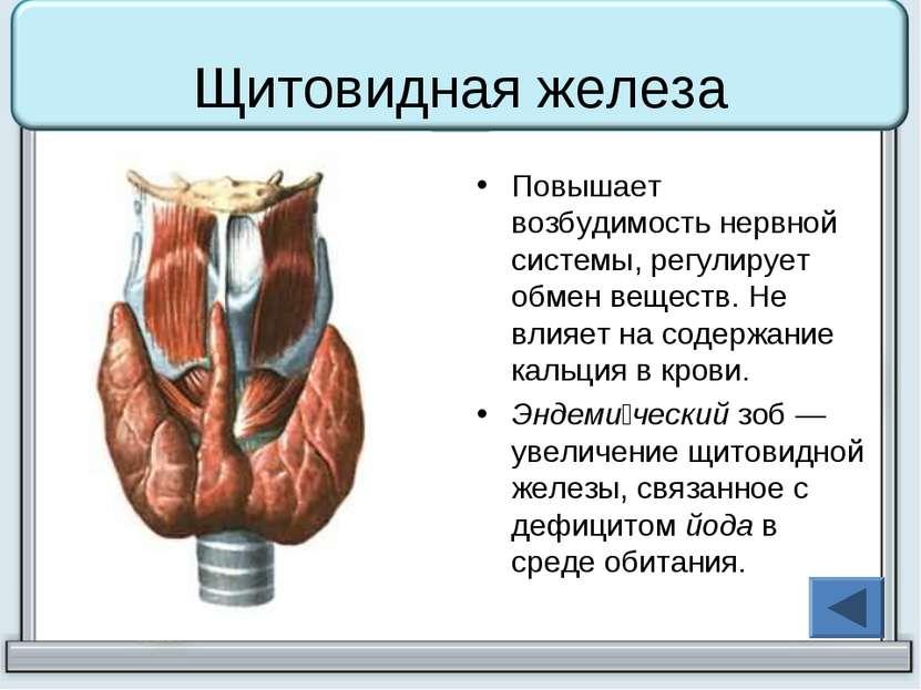 Щитовидная железа Повышает возбудимость нервной системы, регулирует обмен вещ...