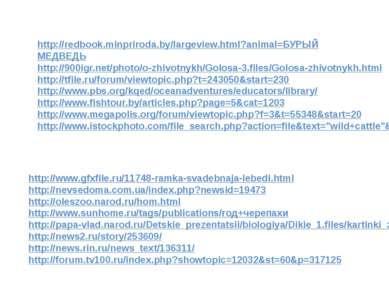 http://redbook.minpriroda.by/largeview.html?animal=БУРЫЙ МЕДВЕДЬ http://900ig...