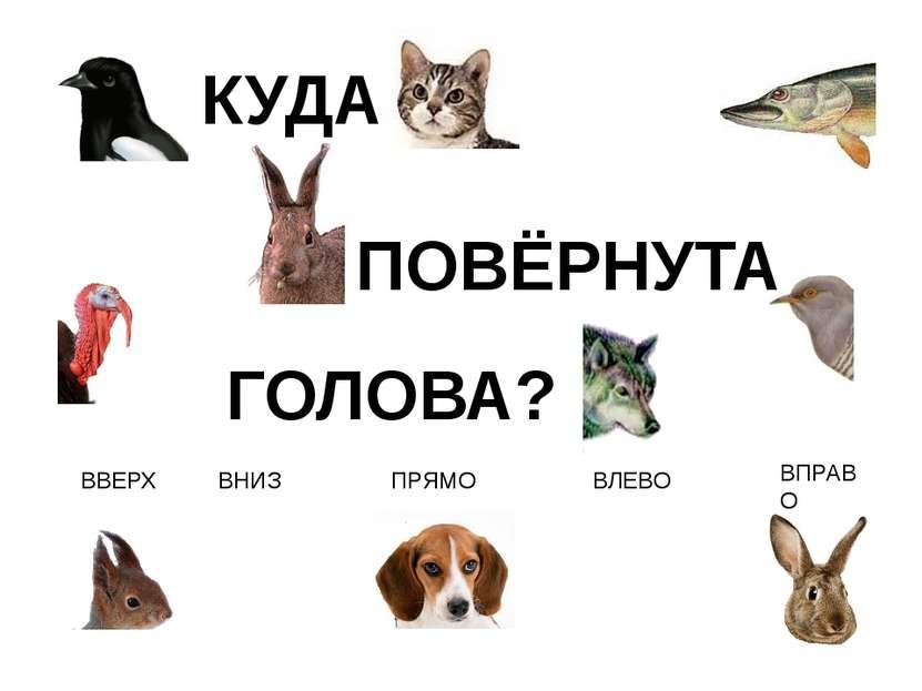 ВЛЕВО ВПРАВО ВВЕРХ ВНИЗ ПРЯМО КУДА ПОВЁРНУТА ГОЛОВА? http://www.deti-66.ru/ко...