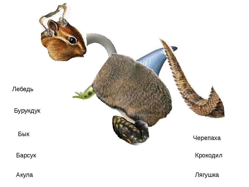 Лебедь Бурундук Бык Барсук Акула Черепаха Крокодил Лягушка http://www.deti-66...