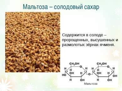 Мальтоза – солодовый сахар Содержится в солоде – пророщенных, высушенных и ра...
